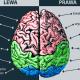 funkcje mozgu 80x80