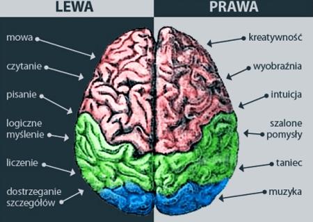 funkcje mozgu